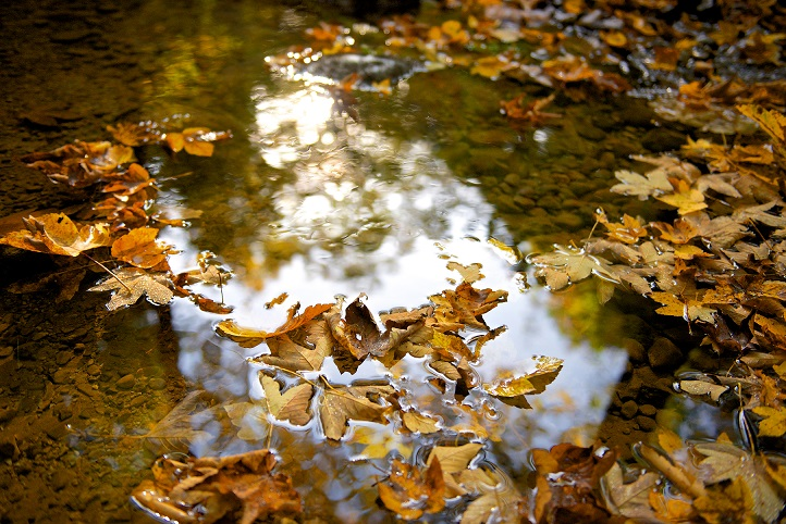 THW 0164web - Der Herbst, der Herbst, der Herbst ist da!