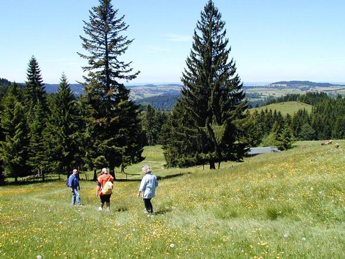 Starennest Wandern Oberstaufen